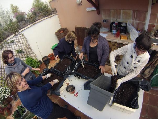 Cultivar en cajas de fruta